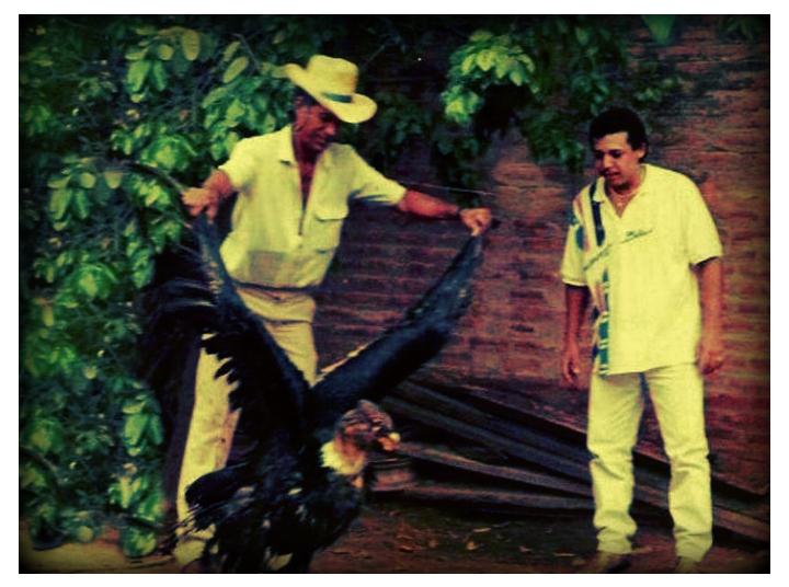 juancho rois y el condor herido